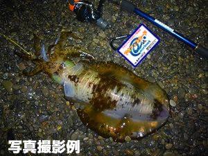 釣果報告掲示板用の写真2撮影例